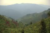 Bwindi