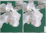 Crop de l'image de comparaison de la pdc et du bokeh entre D300 à f2,4 et D700 à f4 (1,5 diaph).avec 1,8/85 La référence de cadrage est la taille de la fleur en premier plan, la focale (85mm) étant la même avec les deux formats de capteur, on a utilisé une distance 1,5 fois plus grande avec le D300 pour un même cadrage. D700 à gauche  Si on respecte les correspondances entre 24/36 et aps c: diaphragme plus ouvert de 1,5 valeur avec l'appareil aps c et cadrage identique (soit avec le même objectif en augmentant le distance de x1,5fois, soit en utilisant un objectif de focale 1,5 fois plus courte) le rendu est identique. Une autre image affichée plus grand avec diaph un peu décalé mais toujours comparable http://www.pbase.com/image/115969813 Voir ici  pour une autre remarque: http://www.pbase.com/br/image/101942859