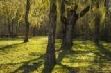 Morning Light in Kirk Park