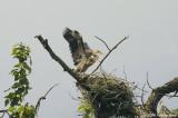 A Little Love Nest