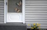 D50-2008-03-16_034.jpg