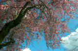 D50-2008-03-27_007a.jpg