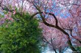 D50-2008-03-27_012x.jpg