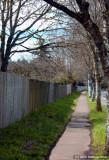 D50-2008-03-27_014.jpg