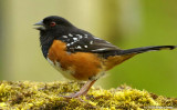 Birds - Noncaptive