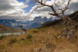 08-01 Cuernos del Paine 01.JPG