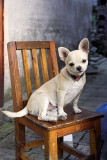 dog & chair