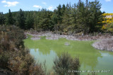 Green-hued water of Parariki Stream - near Lake Rotokawa outlet