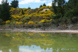Reflecting gorse in green-hued waters - not very poetic