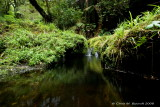 Streams - Moving water