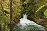 Okere Falls - Trout Pool
