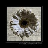 Musical flower (print on plexiglas 80x80cm)