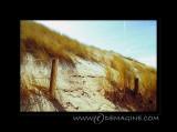 Lomo sand dunes.
