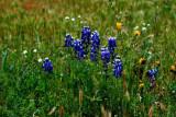 Spring Flowers - Bear Mountain & Mojave