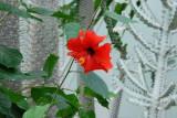 Botanical Garden Exotics