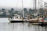 Foggy Sonoma Coast