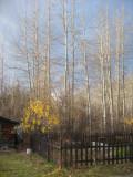 Trees_FallGarden.jpg