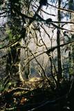 WetForest.jpg