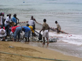 TobagoJackfishDay2.jpg