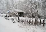 Winter Garden.jpg