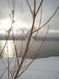Winter Snowy Willow.jpg