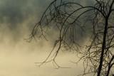 Francois Fog.jpg