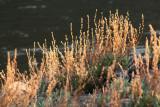River Bank Grasses2.jpg