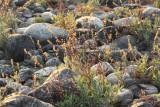 River Bank Grasses4.jpg