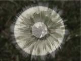 Abstract Light.jpg