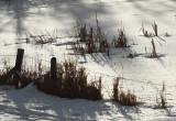 Snowy Swamp.jpg