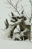 Snowy Driftwood.jpg