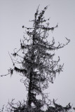 B.C.'s Dead Forests
