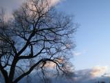 Winter Tree3.jpg