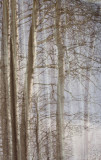 Reflective Forest.jpg