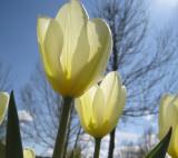 Saluting Spring.jpg