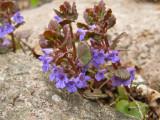 Tiny wildflower.jpg