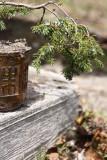 Juniper bonsai.jpg