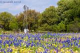 Texas Wildflowers 2010