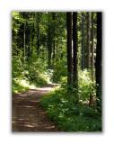 Chemin de Beaumont