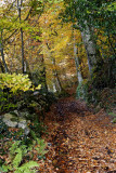 Autumnal story in Limousin (four)