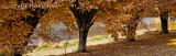 autumn 5.jpg
