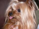 Zoe is my Name - Cute is my Game
