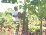 Araguari 002.jpg