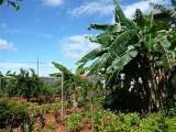 Araguari 005.jpg