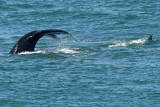 Whales of Africa