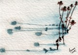 Cone Flower Shadows   1-10
