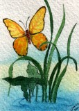 Yellow Butterfly   1-10