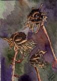 Dried Zinnias     1-10