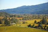 Napa Valley in autumn