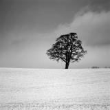 Tree (_DSC2340.jpg)
